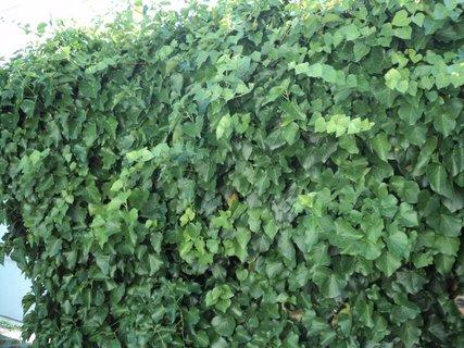 FOTKA - bre�tan na plote