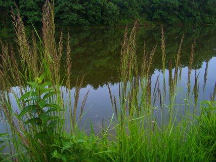 FOTKA - 18.6.2012, u břehu rybníka