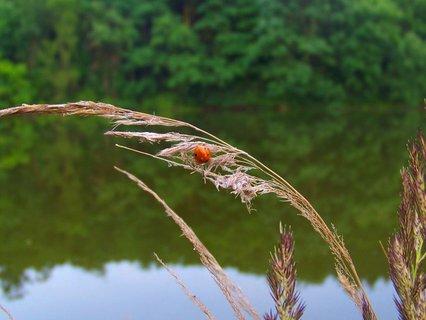 FOTKA - 18.6.2012, berunda se suší... ;-)