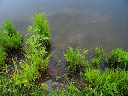 FOTKA - 18.6.2012, u břehu rybníka.....