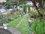 zahrada,celkový pohled