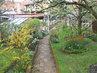 zahrada,cestička