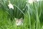 Babiččin kocourek v trávě