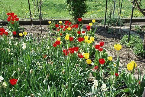 FOTKA - moje zahrada,,,,,,,,,,,,,,