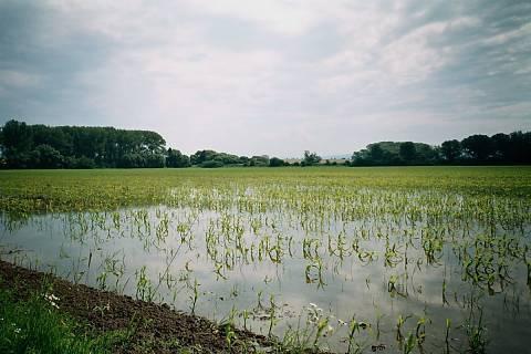FOTKA - pole na Moravě