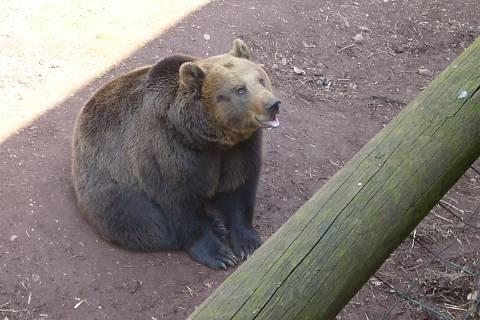 FOTKA - Zoopark Chomutov - medvěd