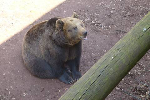 FOTKA - medvěd