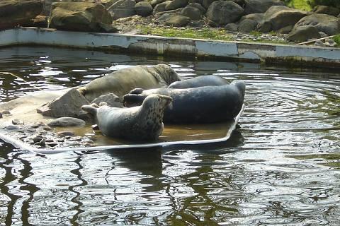 FOTKA - Zoopark Chomutov - tuleni