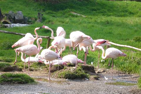 FOTKA - Zoopark Chomutov - pelikáni