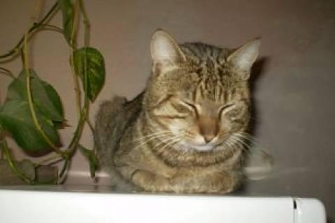 FOTKA - Náš kocourek spí....