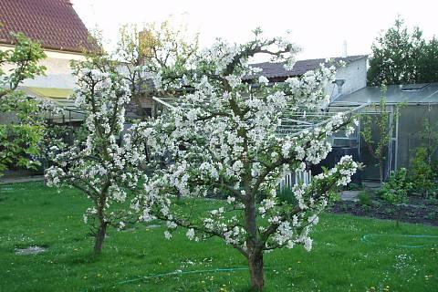 FOTKA - moje zahrada....