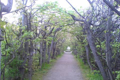 FOTKA - Zámecká zahrada 8