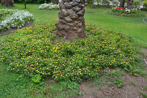 FOTKA - obklopen květy