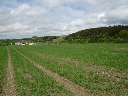 FOTKA - cesta přes pole 6