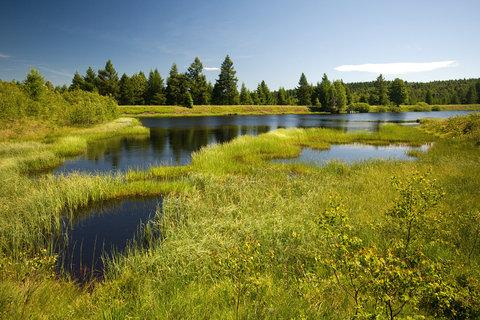 FOTKA - Volárenský rybník,