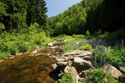 FOTKA - Na�et�nsk� potok