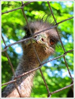 FOTKA - Hlava pštrosa za plotem