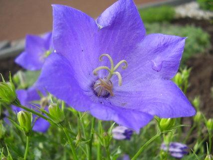 FOTKA - jarní kytky v detailech