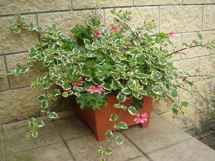FOTKA - květiny na terase   ...