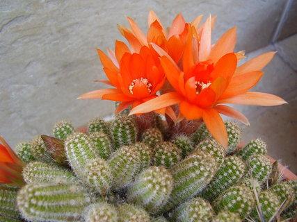 FOTKA - květiny na terase   ....