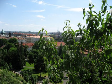 FOTKA - Palácové zahrady pod Pražským hradem 56