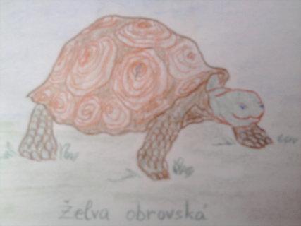 FOTKA - obrázek želvy od dcerky