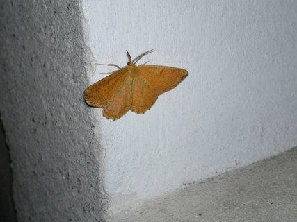 FOTKA - Noční motýl