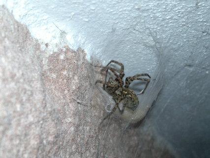 FOTKA - Pavoučice