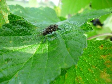 FOTKA - moucha odpočívá