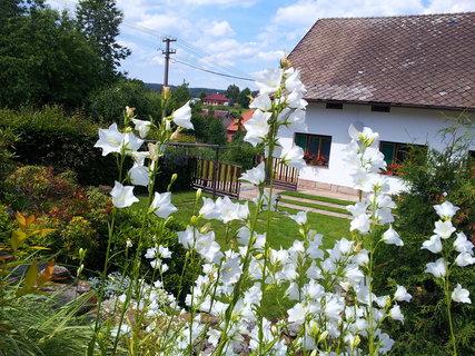FOTKA - Zahrada 1