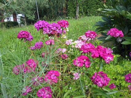 FOTKA - Zahrada 18