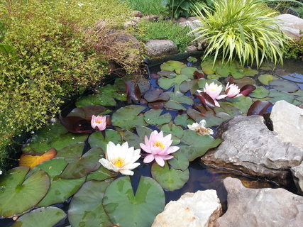 FOTKA - Zahrada 24