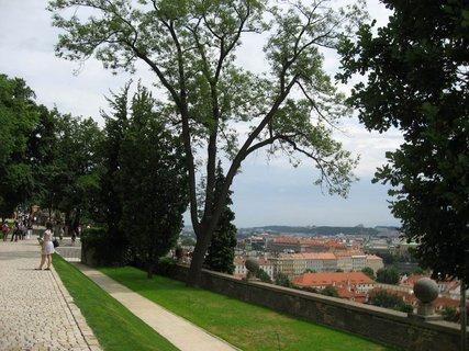 FOTKA - Jižní zahrady Pražského hradu 12