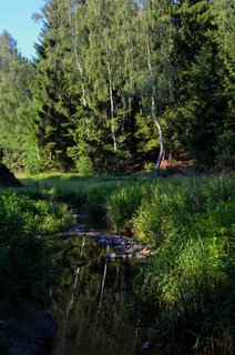 FOTKA - Lesní potůček