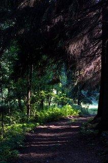 FOTKA - Mýtický les