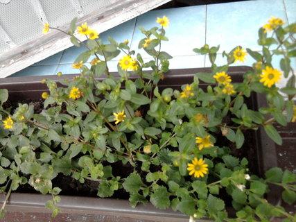 FOTKA - květináče