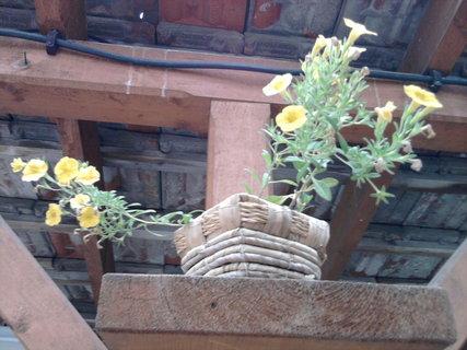 FOTKA - květináč s kvítky