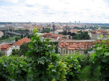 FOTKA - Svatováclavská vinice 51