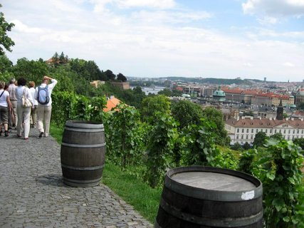 FOTKA - Svatováclavská vinice 54