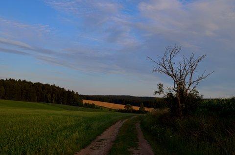 FOTKA - Strom u cesty