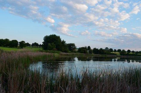 FOTKA - Rybník s rákosím