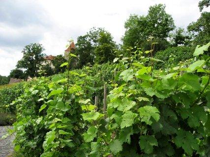 FOTKA - Svatováclavská vinice 56