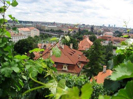 FOTKA - Svatováclavská vinice 58