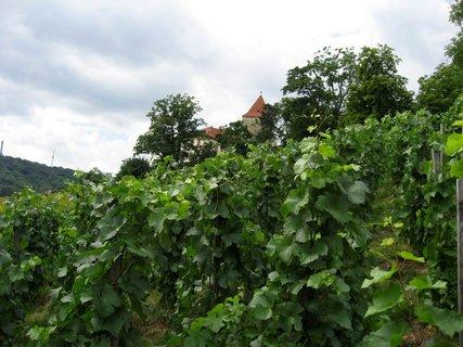 FOTKA - Svatováclavská vinice 57