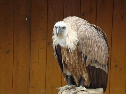 FOTKA - zoo 4