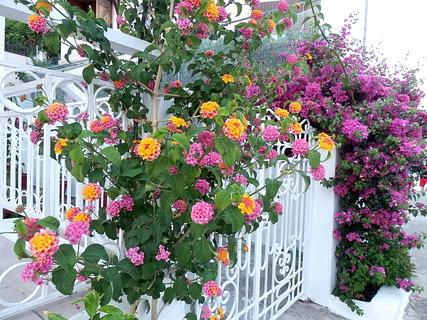 FOTKA - řecké květy 2