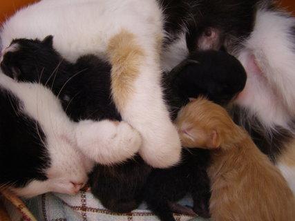 FOTKA - nová koťátka