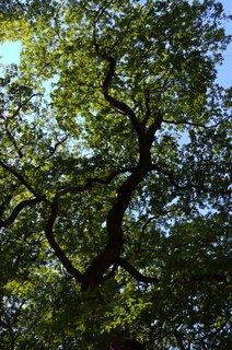 FOTKA - Pod stromem