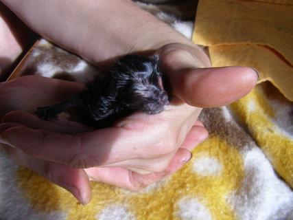 FOTKA - miminko na dlani
