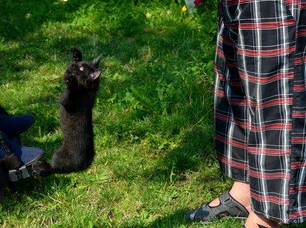 FOTKA - Lítací kocourek, co by pro šunku neudělal